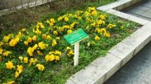 名古屋駅地区街づくり協議会